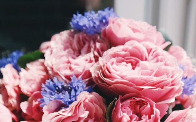 bloemen oude pekela
